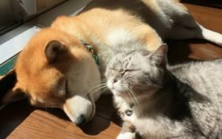 Чем отличается собачий корм от кошачьего?