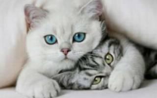 Какие породы кошек ладят с детьми?