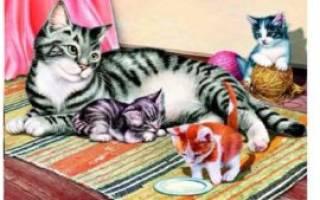 Осложнения после родов у кошки