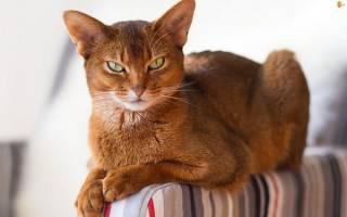 Какая самая красивая порода котов?