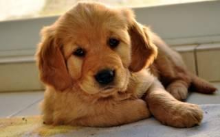 От чего зависит характер собаки?