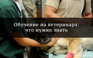 Профессия ветеринар: что нужно знать о курсах обучения