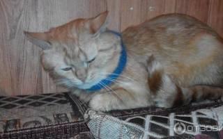 Как приучить уличную кошку к лотку – средство меткий кот