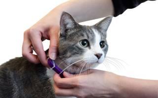 Вывести блох у кошки в домашних условиях