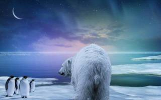 Охотится ли белый медведь на пингвинов?