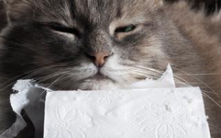 Понос у кошки после глистогонки