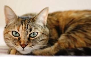 Куда уходит душа кошки после смерти – попадают ли животные в рай?