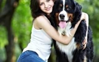 Как высчитать возраст собаки?