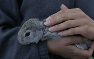 Почему кролики стучат задними лапами?