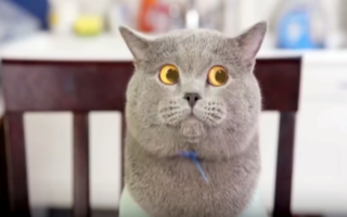Какие породы кошек живут дольше всех?