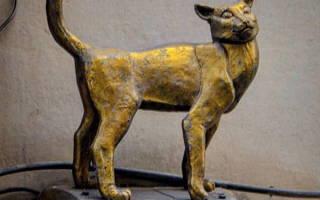Памятник кошке в Санкт петербурге – скульптура кот