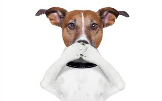 Как избавиться от запаха псины у собаки, вонючий пес