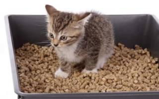 Сколько раз в день писает котенок – кошка редко ходит в туалет по маленькому