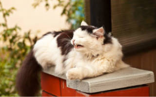 Может ли кот заразиться от человека простудой – кошка простудилась чем лечить