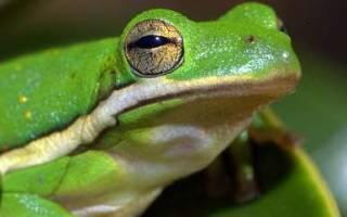 Кто появляется из икры лягушки?