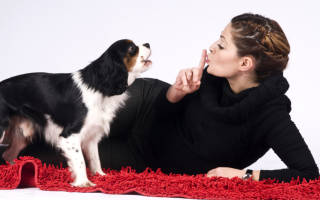 Как отучить щенка лаять дома?