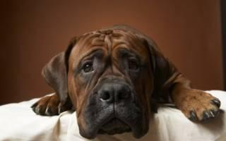Заболевания желудочно кишечного тракта у собак, перекормили щенка симптомы