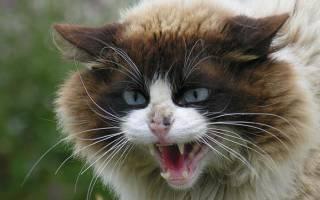 Как отучить котенка царапаться и кусаться – кошка царапается и кусается