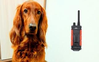 Ошейник с шокером для собак, электроошейник для хаски