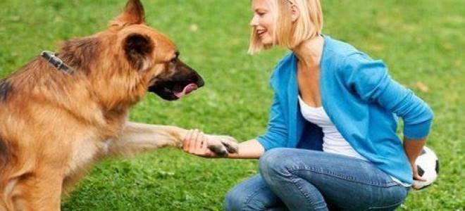 Для чего нужен кинолог-зоопсихолог для собаки
