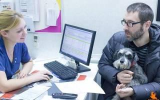 Заболевания желудочно кишечного тракта у собак – болезни ЖКТ у животных