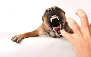 Как отучить щенка огрызаться на хозяина?