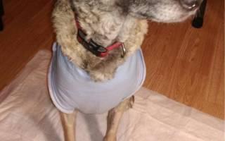 Попона для собак после операции – корсет для таксы