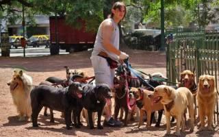 Какие породы собак выгодно разводить для продажи?