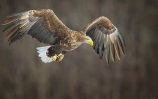 Перелетные птицы урала фото с названиями