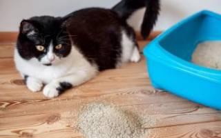 Если у котенка понос чем лечить – фталазол для кошек дозировка