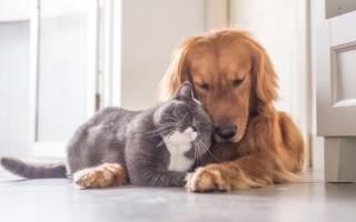 Какие породы собак уживаются с кошками?