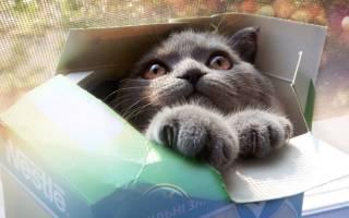 Почему кошки любят коробки и пакеты – кот и пакет