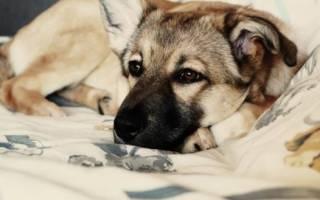 Сколько живут дворовые собаки?