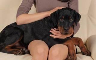 Как сделать клизму собаке в домашних условиях?