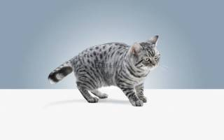 Что будет если кот съест валерьянку?