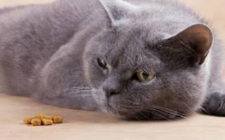 Как повысить аппетит у кота?
