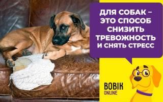 Что делать чтобы щенок не грыз мебель?