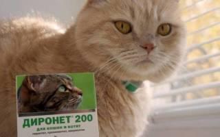 Spot on для кошек инструкция по применению — диронет спот