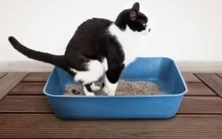 Как сделать клизму котенку в домашних условиях?