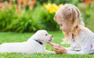Какая порода собак самая лучшая для детей?