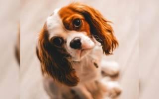 С какой породой собак можно не гулять?