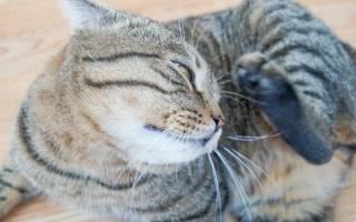 Аллергия на укусы блох у кошек