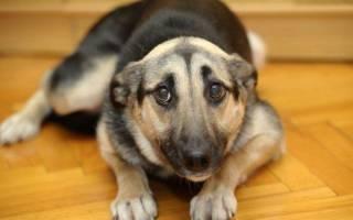 Как сделать вертушку для собаки?