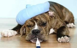 Болезни у собак симптомы и лечение фото