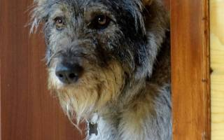 Путешествия с собакой по России