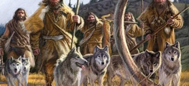 Как появились разные породы собак?