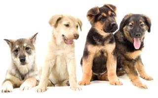 Какую породу собаки лучше выбрать?