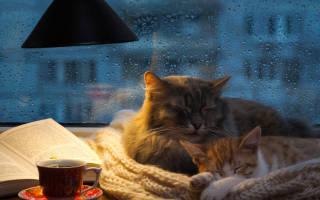 Как заставить кота спать ночью?