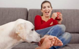 Почему собака лижет ноги человека?