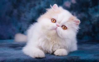 Как выбрать здорового котенка – здоровые коты